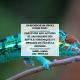 Copie de Copie de Copie de Copie de Offre Service Civique Parc National